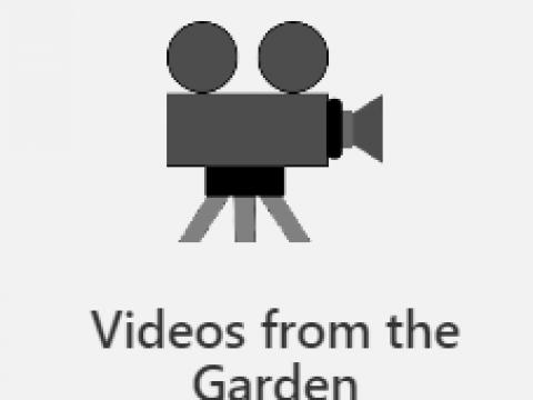 Videos from thr Garden
