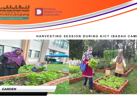 Harvesting Session During KICT Ibadah Camp