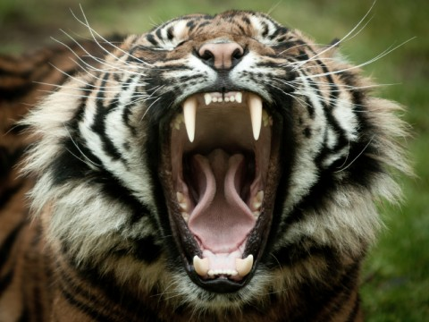 Roaring or toothless tigers?
